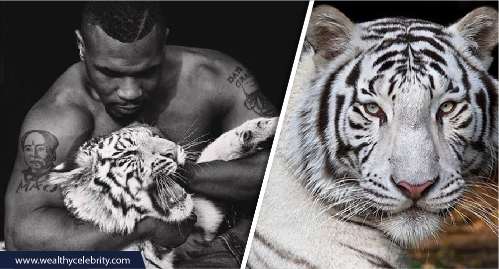 Mike Tyson and Tigers